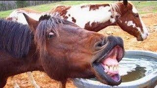 30 MIN Komik Hayvanlar - HD - 720p