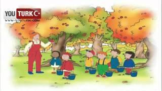 Caillou Türkce - Caillou Elma toplamaya gidiyor