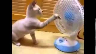 Funny Cat Videos 2014  - Komik Kedi Videoları