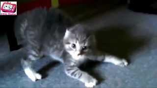 Best Funny Cats Compilation 2014 - BMR Media